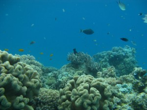 Great Barrier Reef 005
